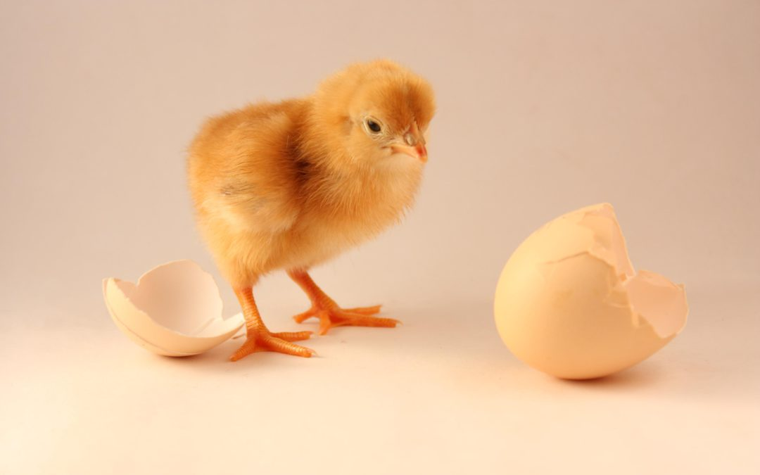 The Chicken and Egg of Innovation Facilitation